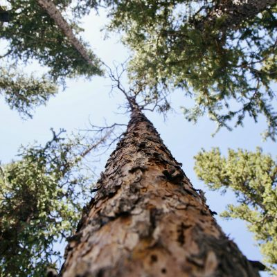 Stuck Up a Tree – One Mom's Reflection on Raising Godly Boys